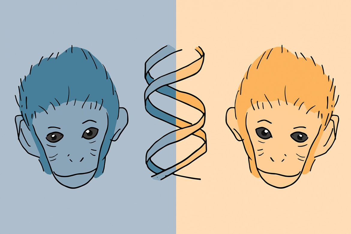"""ethical debate on human cloning The ethics of human cloning essay the ethics of human cloning imagine the world as only beautiful people everywhere you look is a cindy crawford look-a-like: 5'9"""", brown hair, brown eyes, and the perfect smile."""